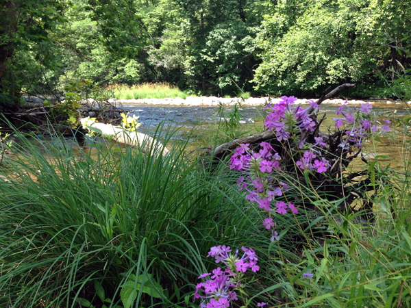 flowers surrounding stream