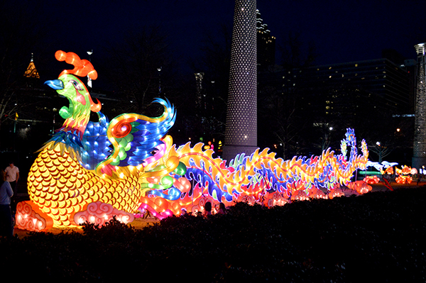 Peacock at the Chinese Lantern Festival